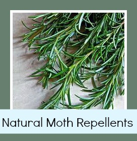 Quick Tip Make Your Own Natural Moth Repellent Southern Savers