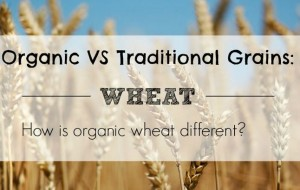 How is organic wheat different?