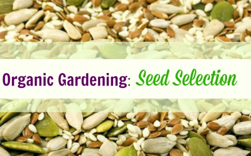 seed selection