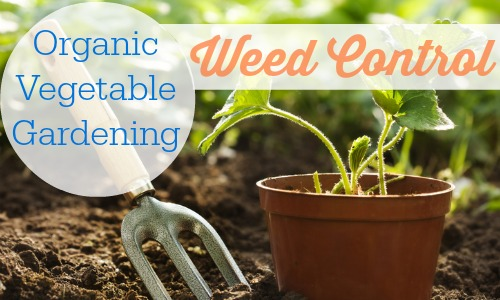 Oragnic ways to control the weeds in your organic vegetable garden.