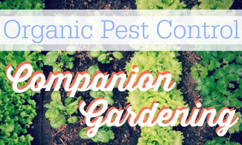 Use companion gardening as a way to try out organic pest control.