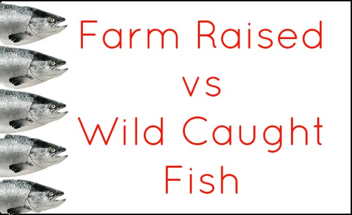 Farm Raised vs Wild Caught Fish on Organic Living Journey