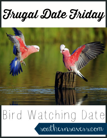 bird watching date