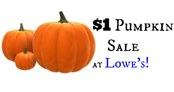 pumpkin sale