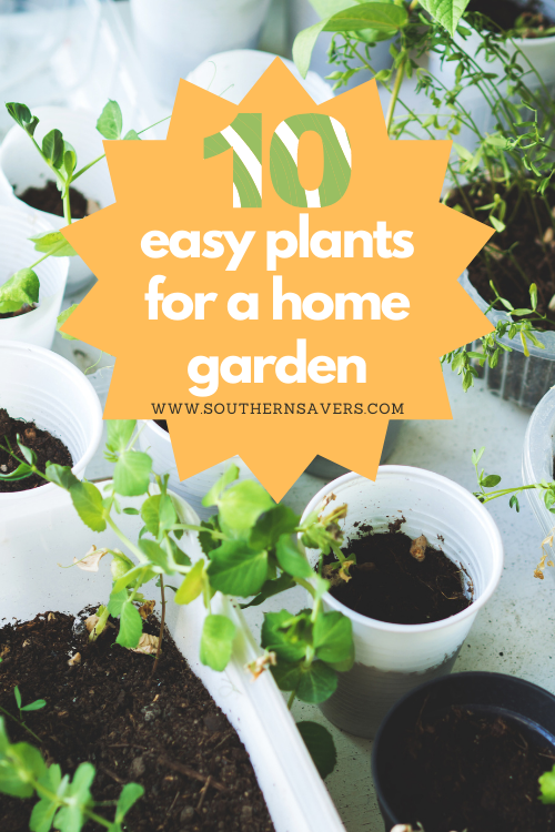 These easy plants are great for beginner and advanced gardeners alike. They don't require a ton of maintenance and the harvest will be super tasty.