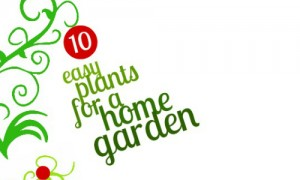 10 easy plants