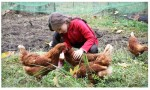 Basics of Raising Backyard Chickens