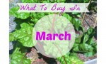 March Grocery Store Trends