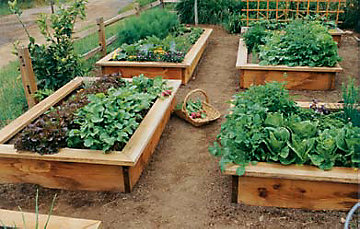raised_bed_garden