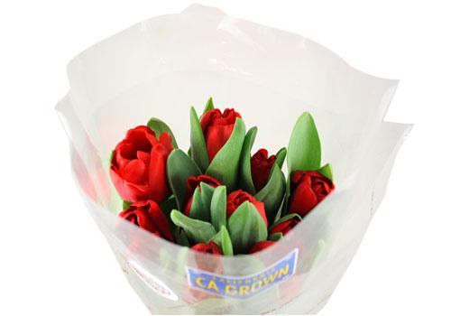 tulips-10-stem
