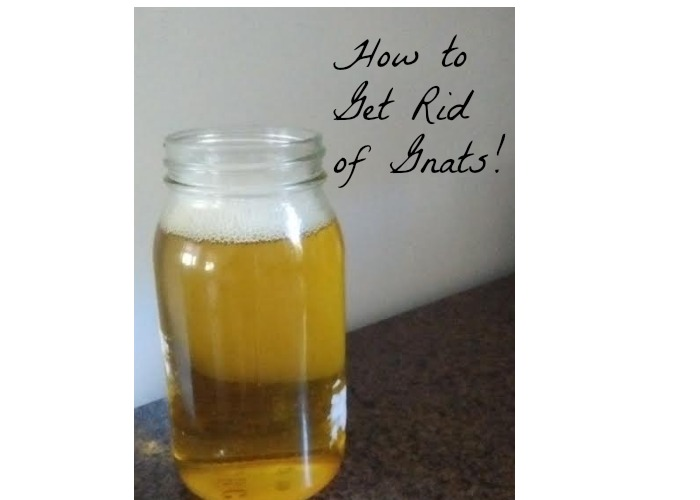 how to get rid of fruit flies and gnats simple fruit salad