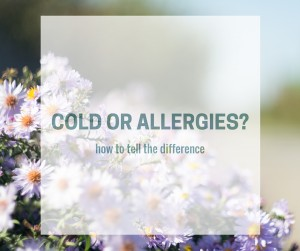 COLD OR ALLERGIES-
