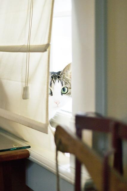 cat-926088_640