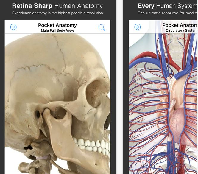 Free human anatomy app