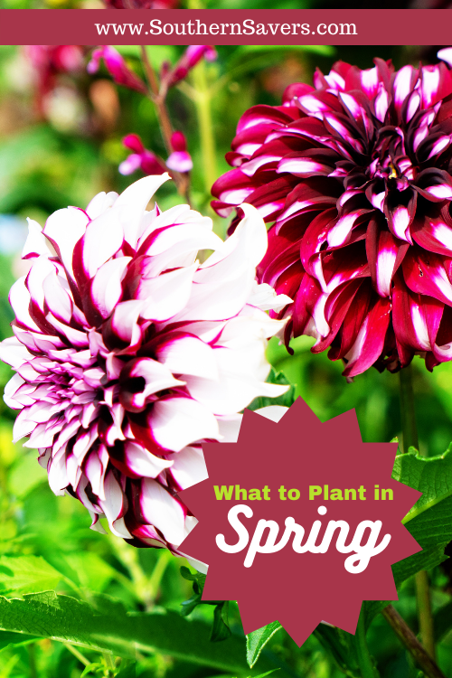 Are you ready to get outside and start planting? Find out what to plant in spring to have a beautiful vegetable or flower garden for summer!