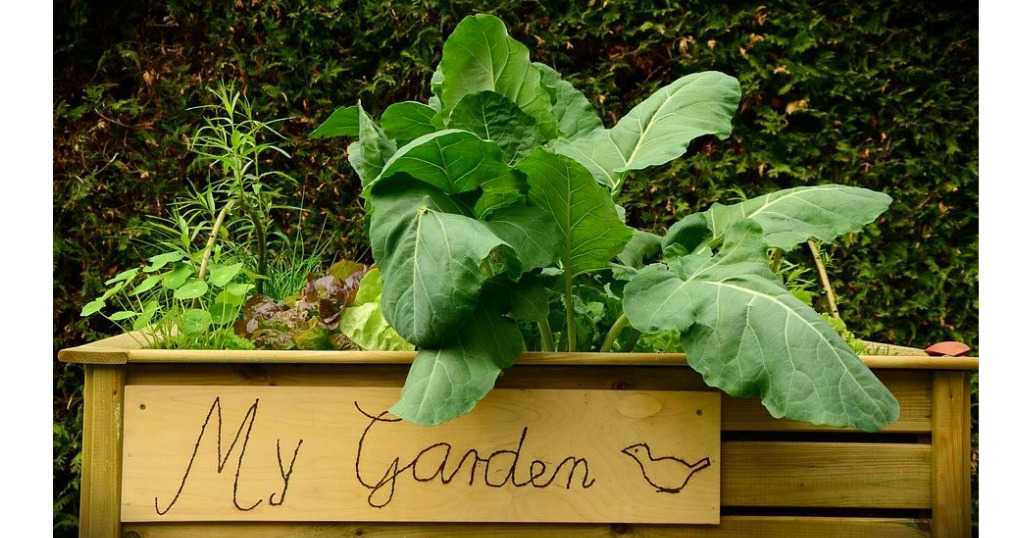 Tips For Starting A Raised Bed Garden Southern Savers