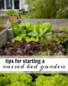 Growing your own vegetables can be super rewarding and possibly even save you some money. Get started with these tips for starting a raised bed garden!