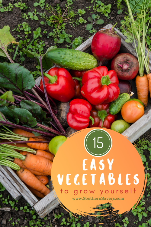 Cut some of the costs of fresh produce by starting a vegetable garden this spring! Here's a list of easy vegetables to grow yourself!