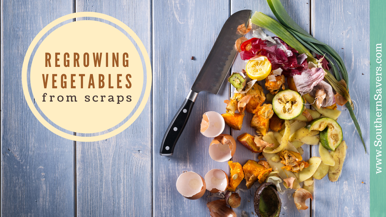 6 vegetables you can re-grow from food scraps | Vegetarian Cooking Blog | Live Green & Good in