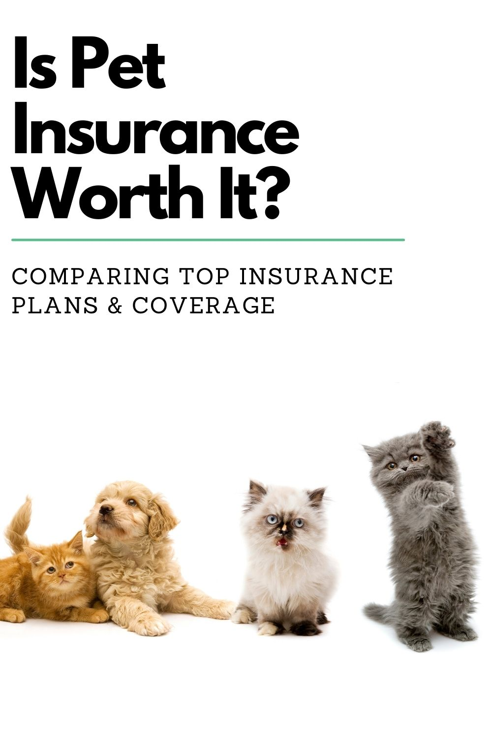 What about Pet Insurance?  Is Pet Insurance worth having?  Let's cover the basics and see how the math plays out.