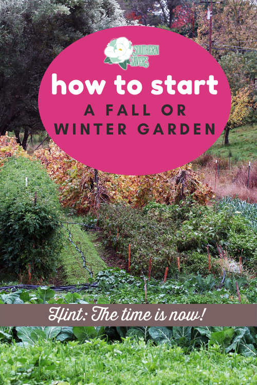 The weather outside may be sweltering, but now is the time for planning and prep work to start a fall or winter garden! Here are my best tips.