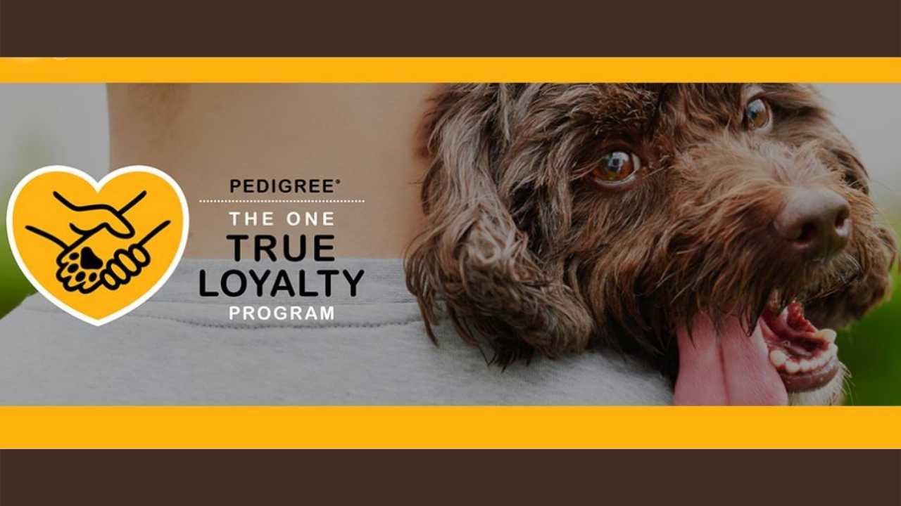 pedigree dog adoption rebate